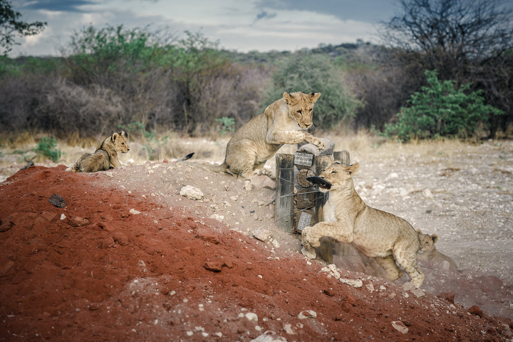 Lions Playground