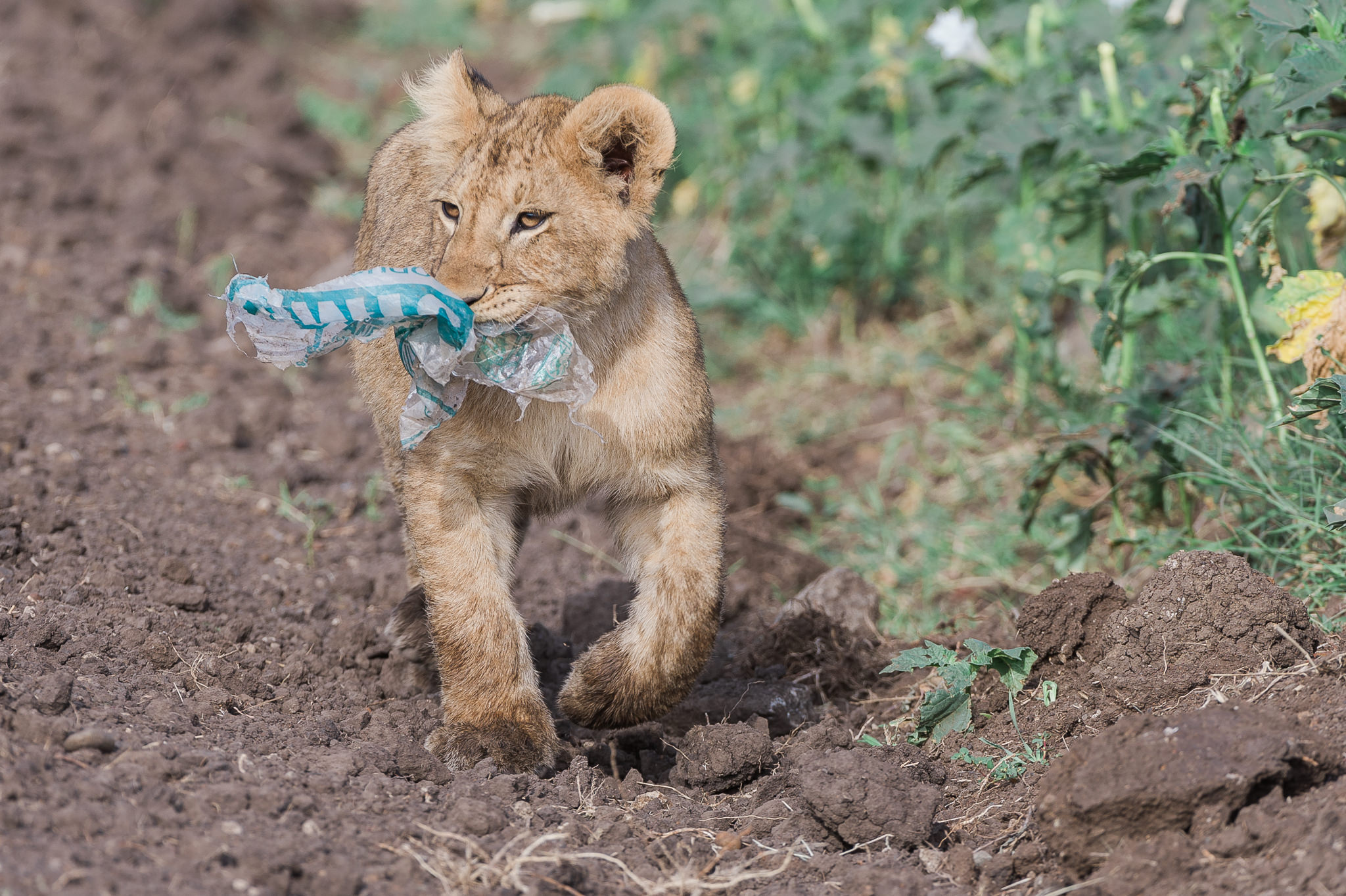 Environmental Issue Masai Mara